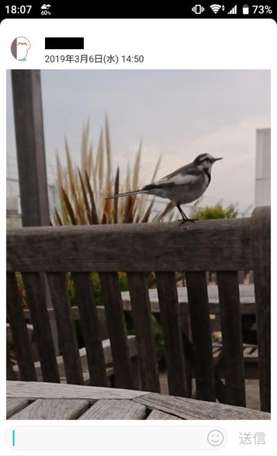幸福の鳥?1
